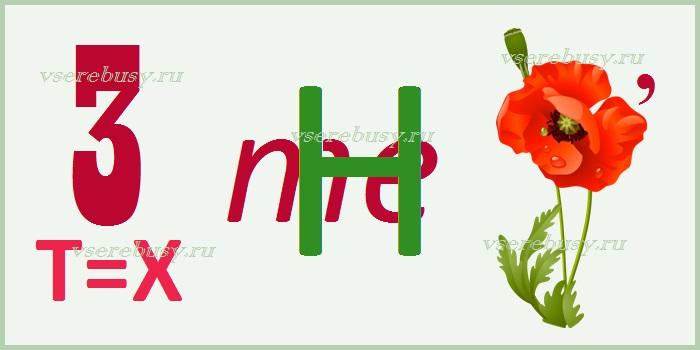ребус хризантема, ребусы про цветы, ребус, ребусы, разгадать ребус, разгадывать ребусы, ребус с ответом, ребусы с ответами, картинки ребусы, ребусы на тему цветы