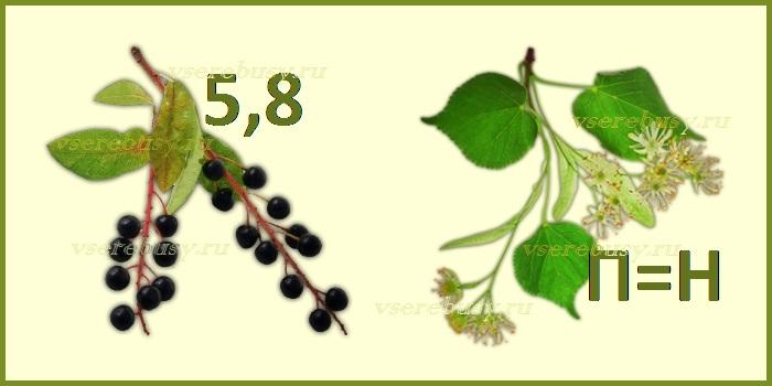 ребус малина, ребусы, ребус, ребусы с ответами, ребусы про ягоды, ребус ягода